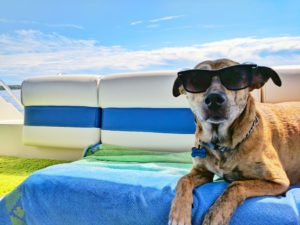 A dog that is wearing sunglasses and laying outside on top of a towel.